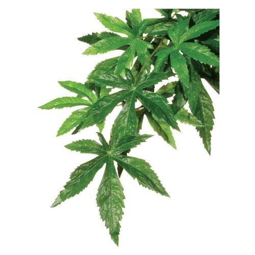 Декорація для тераріума Exo Terra рослина «Abuliton» L (шовк)